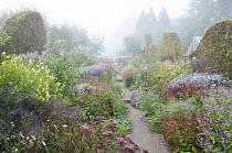 Path through prairie-style double borders, Persicaria amplexicaulis, Strobilanthes rankanensis, Helianthus 'Lemon Queen', asters, wavy clipped hornbeam hedge