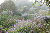Prairie-style double borders, Persicaria amplexicaulis, Strobilanthes rankanensis, asters, wavy clipped hornbeam hedge