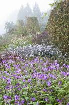 Strobilanthes rankanensis, Aster 'Vasterival', Sanguisorba canadensis, wavy clipped hornbeam hedge