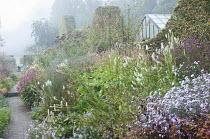 Prairie-style border with Sanguisorba canadensis, Aster 'Vasterival', Persicaria amplexicaulis 'Firedance', vernonia against wavy clipped hornbeam hedge, Rosa moyesii 'Geranium'