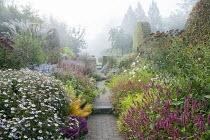 View along path through colourful perennial borders, Persicaria amplexicaulis 'Blackfield' and 'Anne's Choice', eupatorium, aster, kalimeris, amsonia, cosmos