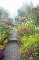 View along path through colourful perennial borders, Persicaria amplexicaulis 'Blackfield' and 'Anne's Choice', Carex muskingumensis 'Oehme', eupatorium, aster, amsonia