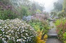 View along path through colourful perennial borders, Persicaria amplexicaulis, eupatorium, aster, kalimeris, amsonia