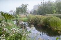 Natural swimming pond, gunnera