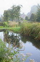 Natural swimming pond, apple tree