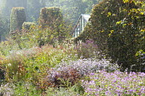 Perennial border, wavy clipped hornbeam hedge, Strobilanthes rankanensis, Aster 'Vasterival', Persicaria amplexicaulis 'Firedance', Sanguisorba canadensis, Rosa moyesii 'Geranium'
