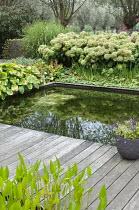 Formal fish pond surrounded by decking, Hydrangea arborescens 'Annabelle', eupatorium, hosta, Miscanthus sinensis 'Zebrinus'
