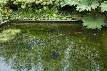 Formal fish pond, gunnera, Hydrangea arborescens 'Annabelle', Alchemilla mollis