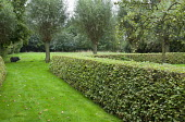 Clipped hornbeam hedge, pollarded willow trees, lawn, pig, pear tree
