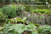 Raised beds in vegetable plot, rhubarb, fennel, Echinacea purpurea, Verbena bonariensis