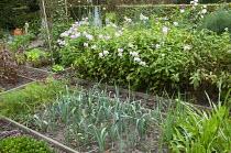 Kitchen garden, leeks, carrots, phlox