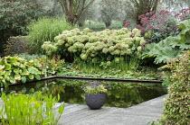 Formal fish pond surrounded by decking, Hydrangea arborescens 'Annabelle', eupatorium, gunnera, hosta, Miscanthus sinensis 'Zebrinus'
