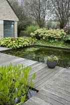 Formal fish ponds surrounded by decking, Hydrangea arborescens 'Annabelle', eupatorium, hosta, Miscanthus sinensis 'Zebrinus'