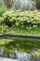 Formal fish pond, Hydrangea arborescens 'Annabelle', Alchemilla mollis, Miscanthus sinensis 'Zebrinus', reflection
