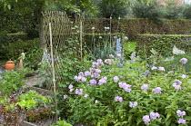Nasturtiums on willow trellis, phlox, kitchen garden with salads, lettuce