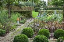 Kitchen garden, box balls, peonys, aconitum, hornbeam hedge