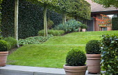 Sloping lawn, box balls in containers, pleached hornbeams