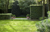 Sloping lawn, hornbeam hedge, clipped box balls in containers