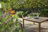 Wooden table on decked patio, pleached hornbeam screen, clipped box balls in containers, hydrangea