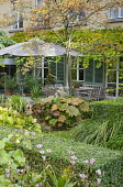 Table and chairs under umbrella on patio by house, Darmera peltata, tricyrtis, clipped box hedges, Koelreuteria paniculata