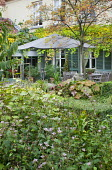 Table and chairs under umbrella on patio by house with shutters, Darmera peltata, tricyrtis, Koelreuteria paniculata