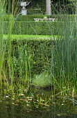 View through bulrushes to table and chairs on lawn, Typha latifolia, Schoenoplectus lacustris, syn. Scirpus lacustris, clipped box hedges, urn