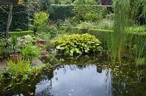 Typha latifolia and hosta at pond edge
