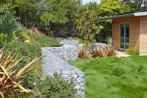 Gabion stone retaining wall, Phormium 'Sunset', lawn of native Californian bentgrass, Agrostis pallens, Cistus salviifolius