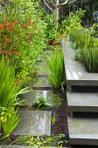 Crocosmia paniculata, stepping stone polished concrete path, raised terrace