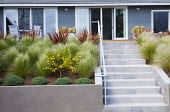 Phormium 'Firebird', Stipa tenuissima syn. Nassella tenuissima, steps leading to terrace by house with table and chairs, Citrus sinensis 'Cara Cara'