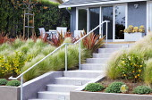 Phormium 'Firebird', Stipa tenuissima syn. Nassella tenuissima, steps leading to terrace by house with table and chairs, Citrus x meyeri