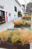 Anemanthele lessoniana syn. Stipa arundinacea and anigozanthos in large Cor-Ten steel container on terraced sidewalk pavement