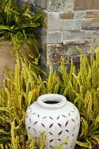 Stone urn, ferns
