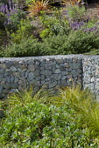 Gabion retaining wall filled with stone recycled from demolitions, Cistanthe grandiflora 'Jazz Time', Lomandra longifolia 'Breeze', Lupinus albifrons, Cistus salviifolius