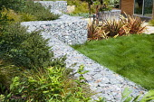 Gabion retaining wall filled with stone recycled from demolition, Phormium 'Sunset', lawn of native Californian bentgrass, Agrostis pallens, Cistus salviifolius