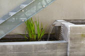 Basement courtyard with concrete raised pond and fountain, rendered wall, Cyperus papyrus