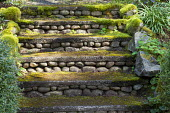 Stone steps covered in moss