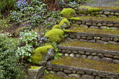 Stone steps covered in moss, Trillium rivale