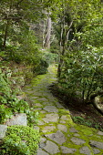Crazy paving path through woodland, rhododendron