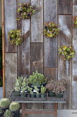 Succulent decoration roundels on recycled timber wall