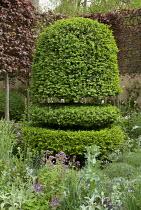 Clipped Buxus sempervirens 'Rotundifolia' topiary in border, pleached Fagus sylvatica Atropurpurea Group, Centranthus lecoqii