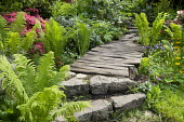 Rustic wooden path through woodland garden, stone steps, ferns, rhododendron, primula