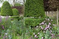 Clipped Buxus sempervirens 'Rotundifolia' topiary, pleached Fagus sylvatica Atropurpurea Group, Rosa, delphiniums, Centranthus lecoqii, Rosa 'Reine Victoria' on woven hazel domes