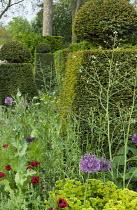 Clipped yew topiary, Agrostemma githago, Allium atropurpureum, Euphorbia x martinii, Crambe cordifolia, Papaver commutatum 'Ladybird'