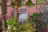 Ornate gate leaning against pink painted corrugated iron wall, tropical plants