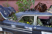 Old car planted with plants