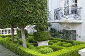 Box parterre front garden, topiary in containers