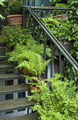Ferns in terracotta containers on metal staircase