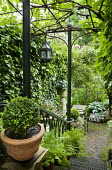View down steps through Gothick arch screen to secret urban garden, metal chairs around table on brick patio, hostas, box ball and ferns in containers, lantern