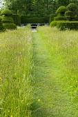 Mown grass path through wildflower meadow leading to wooden bench, yew topiary